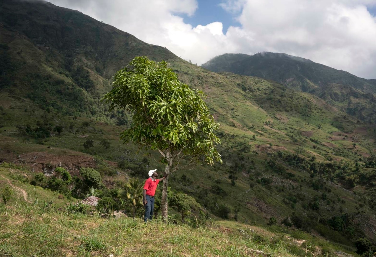 Haiti – Treedom ha piantato oltre 150mila alberi ad Haiti – Gli alberi hanno un ruolo decisivo nell'impedire l'erosione e il dilavamento del terreno (1)