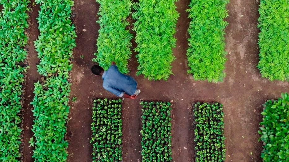 Tanzania – Vivaio – Il primo passo per realizzare un progetto Treedom è la costruzione di vivai in loco, che rimarranno in uso alle comunità locali