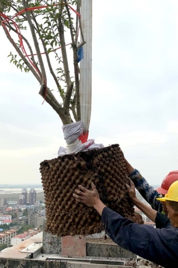 Foto Easyhome Huanggang Vertical Forest 4