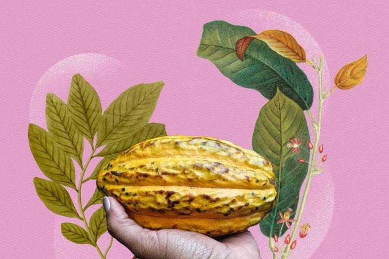 cacao_chocolate_hope©finedininglovers_artwork_biodiversityLibrary