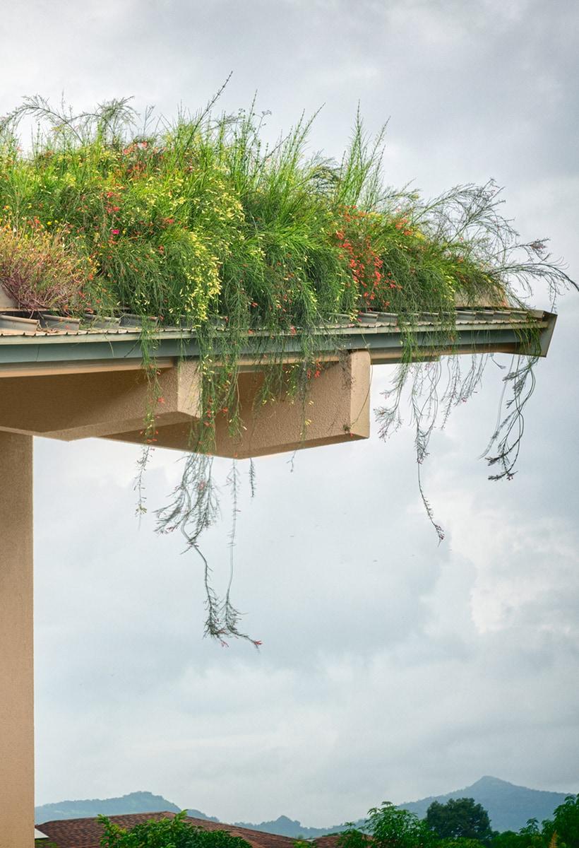 In Mumbai, a garden on the roof
