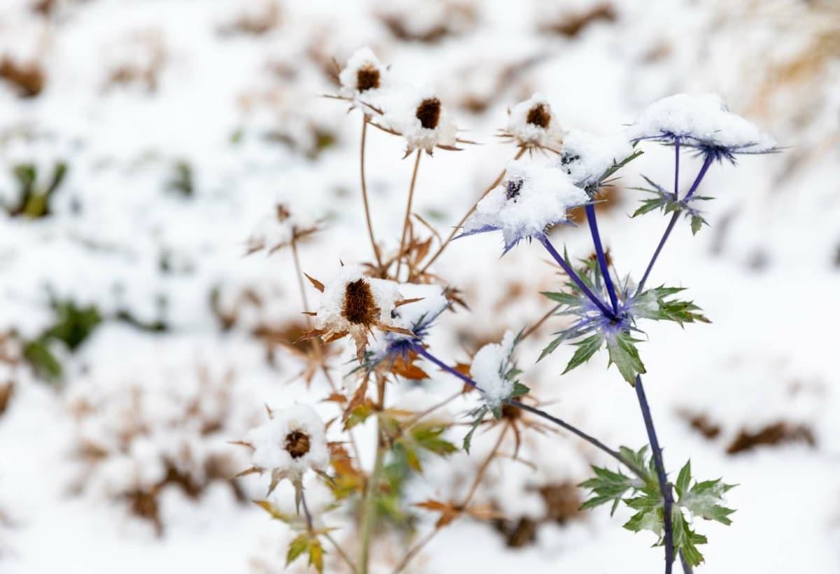 Oudolf_Garten_Dez20_Snow (3)-4437043