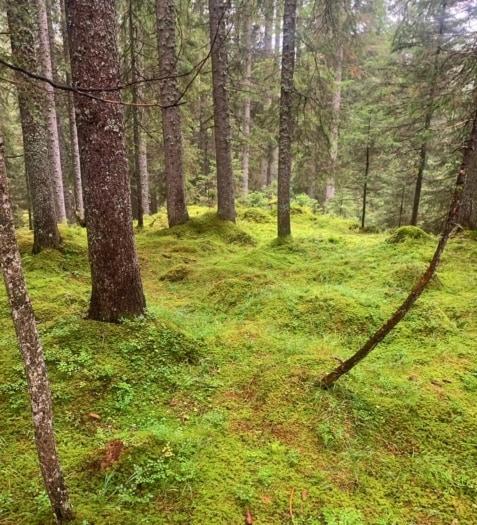 Val di Fiemme Parco Naturale di Paneveggio